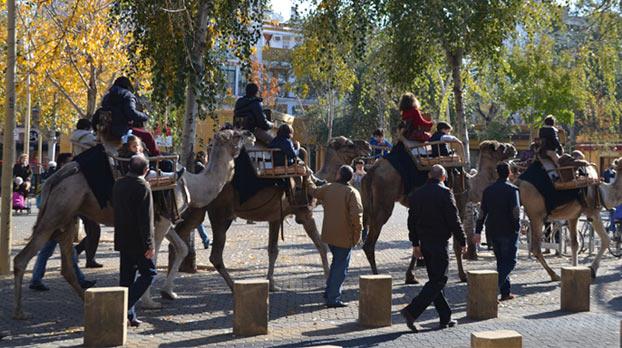 camello-navidad-sevillaconlospeques