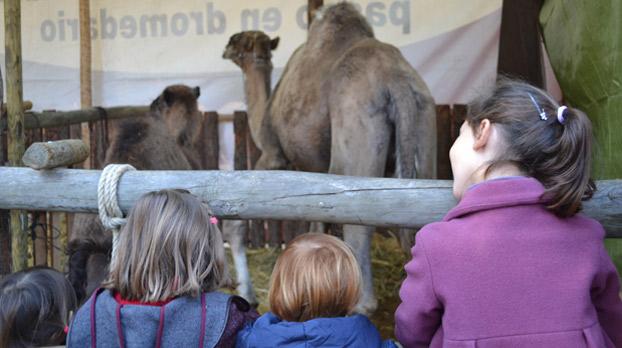 navidad-camellos-alameda-sevillaconlospeques