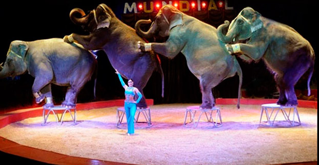 circo-feria-elefantes-sevillaconlospeques
