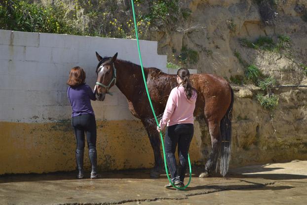 campamentodeverano-sevilla-caballos-sevillaconlospeques