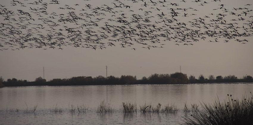 Dehesa de abajo aves volando   Sevilla con los peques