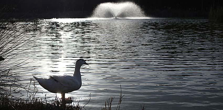 Parques de Sevilla: Parque Infanta elena | Sevilla con los peques