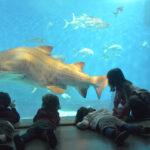 Acuario de Sevilla con niños mirando los peces y tiburones | Sevilla con los peques