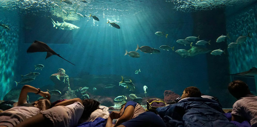 Una noche con los tiburones en el Acuario de Sevilla |Sevilla con los peques