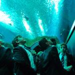 El acuario de Sevilla se convierte en un gran aula para los colegios