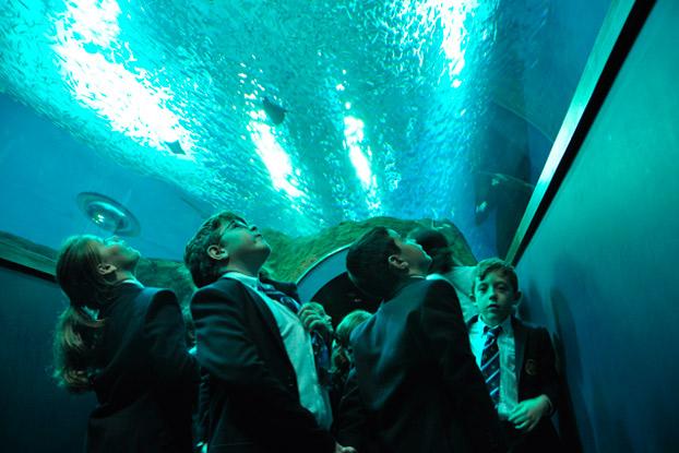acuario-sevilla-talleres-colegios-sevillaconlospeques