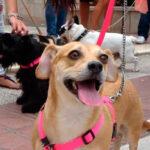 Bormujos celebra con los niños el dia del perro | Sevilla con los peques