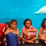 Campamento acuario de Sevilla |Sevilla con los peques