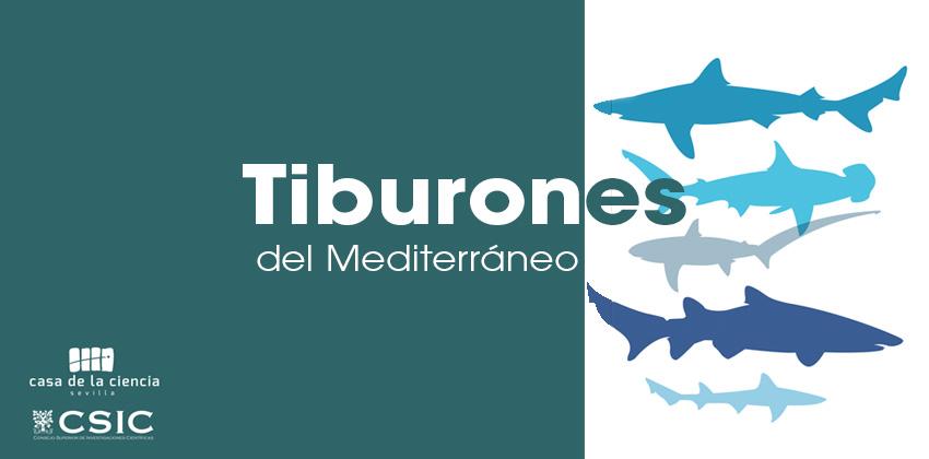 Taller tiburones del mediterráneo en casa de la ciencia | Sevilla con los peques