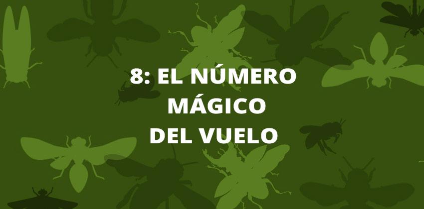 Talleres para niños en casa de la ciencia, 8 el número mágico del vuelo | Sevilla con los peques