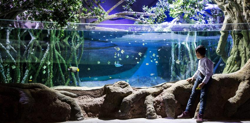 Exposición de Medusas en el Acuario de Sevilla, estanque de peces |Sevilla con los peques