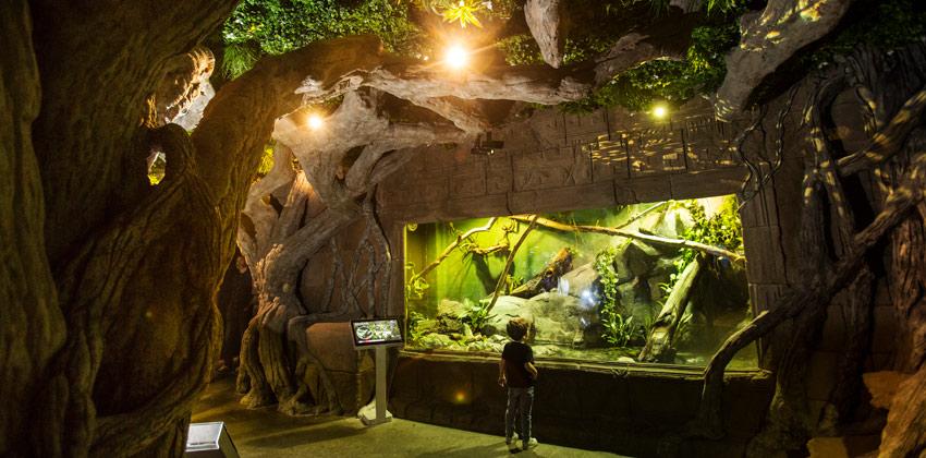 Exposición de Medusas en el Acuario de Sevilla , basiliscos verdes |Sevilla con los peques