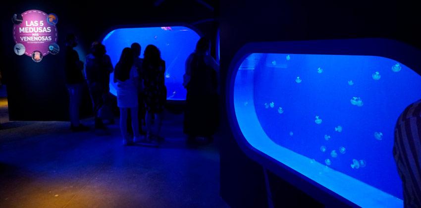 Exposición de Medusas en el Acuario de Sevilla, medusas venenosas |Sevilla con los peques