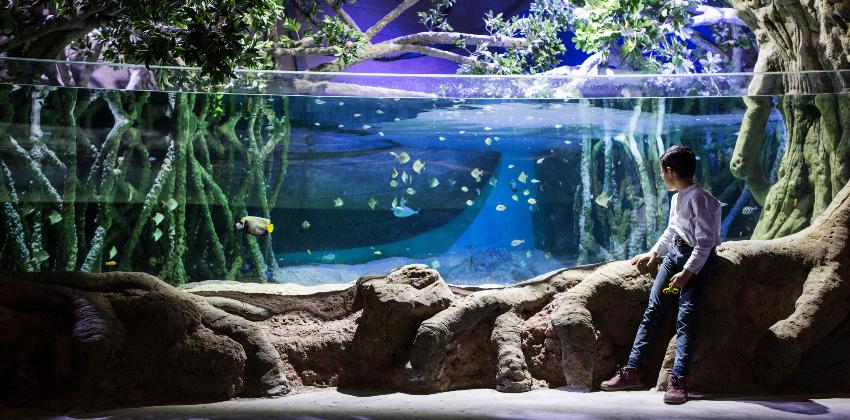 visitar el acuario de Sevilla 00 | Sevilla con los peques