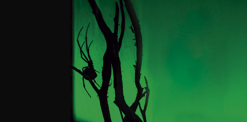 Veneno, una nueva exposición el Museo Casa de la Ciencia de Sevilla 02   Sevilla con los peques